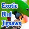 Exotic BIrd JIgsaw spielen!